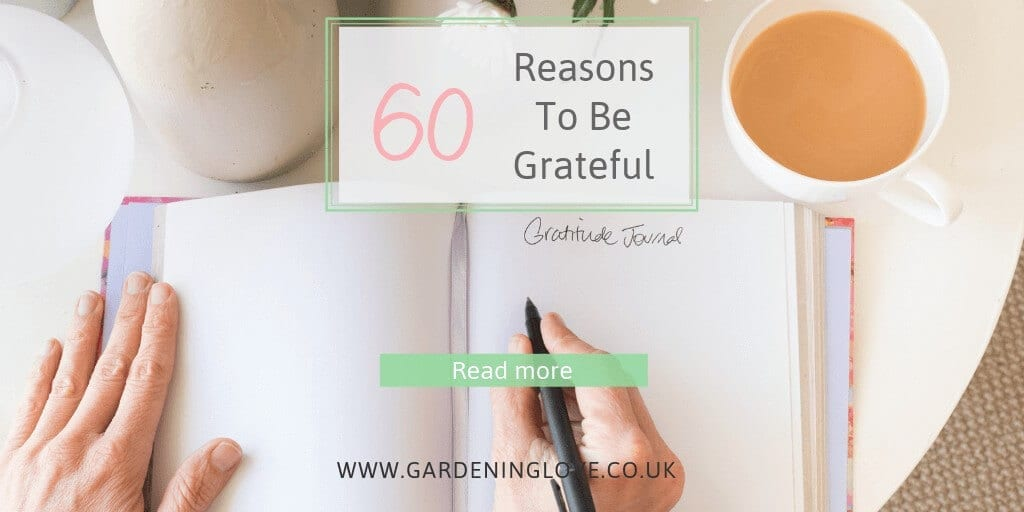 60 Reasons to be grateful when life gets tough